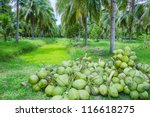 Field Of Coconut Trees In...