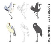 Crane Sketch  Bird Flying Over...