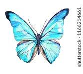 beautiful blue  butterflies ... | Shutterstock . vector #1166214661
