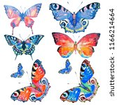 beautiful color butterfly... | Shutterstock . vector #1166214664