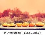 autumn pumpkins harvest... | Shutterstock . vector #1166268694