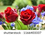 red roses in a beautiful summer ... | Shutterstock . vector #1166403337