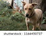a sad little dog in a shelter.... | Shutterstock . vector #1166450737