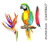 watercolor parrots handmade on ... | Shutterstock . vector #1166458627