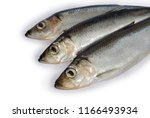 Stock photo fresh baltic herring fish on white background with clipping path 1166493934