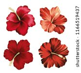 tropical vintage hibiscus... | Shutterstock .eps vector #1166519437