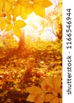 autumn background with maple... | Shutterstock . vector #1166546944