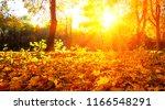 autumn trees on sun in park | Shutterstock . vector #1166548291