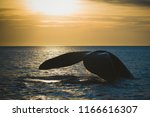 whale tail in peninsula valdes  ... | Shutterstock . vector #1166616307