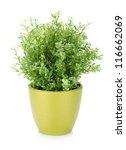 decorative flower in flowerpot. ...   Shutterstock . vector #116662069