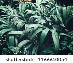 tropical fern leaves | Shutterstock . vector #1166650054