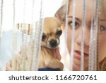 young woman with her chihuahua... | Shutterstock . vector #1166720761