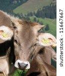 Swiss cow against Alpine view - stock photo