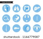 vector isolated illustration of ... | Shutterstock .eps vector #1166779087