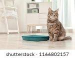 adorable grey cat near litter... | Shutterstock . vector #1166802157