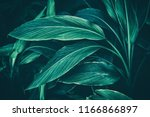 tropical leaf  dark green... | Shutterstock . vector #1166866897