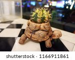 cactus in a turtle shaped pot... | Shutterstock . vector #1166911861