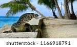 iguana waiting on stone near...   Shutterstock . vector #1166918791