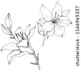 wildflower lilies in a vector... | Shutterstock .eps vector #1166965357
