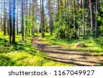 green forest path in sunny day... | Shutterstock . vector #1167049927