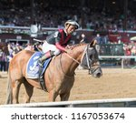 Small photo of Saratoga Springs, NY, USA - August 25, 2018: Whitmore ridden by Ricardo Santana, Jr. poses for photographers after winning the Forego Stakes on Travers day August 25, 2018 Saratoga Springs, NY, USA