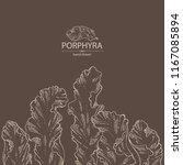 porphyra  porphyra seaweed. red ... | Shutterstock .eps vector #1167085894