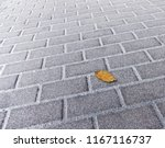 a yellow autumn leaf lying on a ... | Shutterstock . vector #1167116737