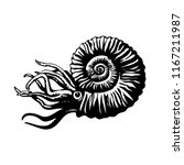Sketch of prehistoric ammonite. Extinct marine mollusc. Black and white isolated hand drawn vector illustration.