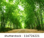 A Path Is Surrounded By Bamboo