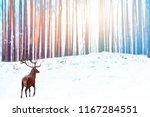 lonely noble deer against... | Shutterstock . vector #1167284551