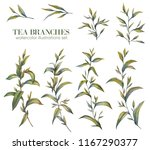 botanical illustration. tea set.... | Shutterstock . vector #1167290377