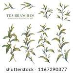 botanical illustration. tea set.... | Shutterstock . vector #1167290377