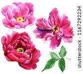 wildflower peony pink flower in ...   Shutterstock . vector #1167292234