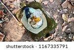 waste in the garden | Shutterstock . vector #1167335791