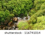 a forest with thick green grown ... | Shutterstock . vector #116741014