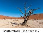 silhouette of dead trees in... | Shutterstock . vector #1167424117