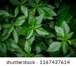 nature plane greenery leaf... | Shutterstock . vector #1167437614