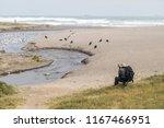 one person birdwatcher at lluta ... | Shutterstock . vector #1167466951