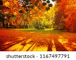 fall trees in sunny autumn park ... | Shutterstock . vector #1167497791