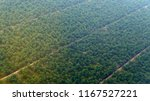aerial view of oil palm... | Shutterstock . vector #1167527221