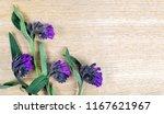 comfrey  symphytum officinale ... | Shutterstock . vector #1167621967