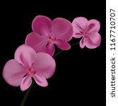 orchid flower wih dark backgroud   Shutterstock .eps vector #1167710707