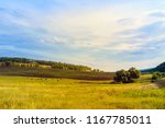 a herd of cows and sheep and... | Shutterstock . vector #1167785011