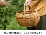 basket and hand harvest black...   Shutterstock . vector #1167845254