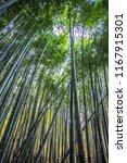 arashiyama bamboo groves | Shutterstock . vector #1167915301