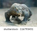 Komodo Dragon  The Largest...