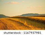 stubble field with straw and... | Shutterstock . vector #1167937981