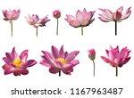 Collection Set Fresh Pink Lotus - Fine Art prints