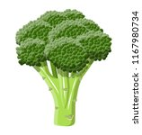 green broccoli vegetable.... | Shutterstock .eps vector #1167980734