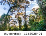 cloud forest covering san pedro ... | Shutterstock . vector #1168028401